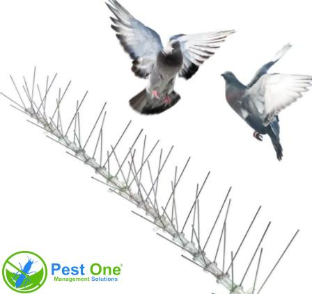Kiểm soát chim