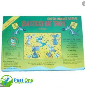 Keo bẫy chuột Catch Mouse USA 1