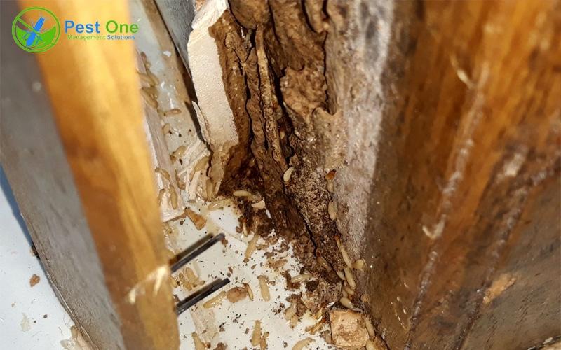 Cách diệt mối mọt gỗ hiệu quả