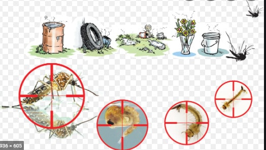 Chế phẩm diệt bọ gậy - lăng quăng Aquastrike VCF.