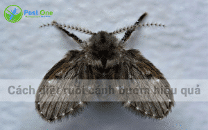 Cách diệt ruồi cánh bướm hiệu quả