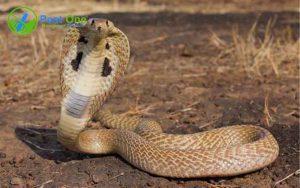 Cách nhận biết nhà có rắn